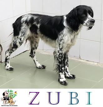 (Español) ZUBI