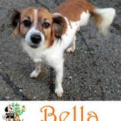 (Español) BELLA