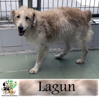 (Español) LAGUN