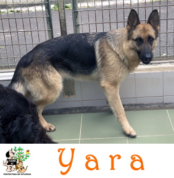 (Español) YARA