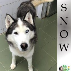 (Español) SNOW